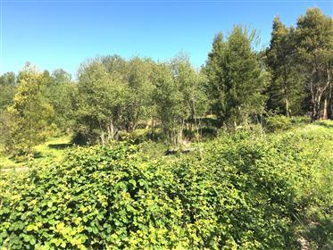 Plot of Land Adjacent to River Minho - Great Investment