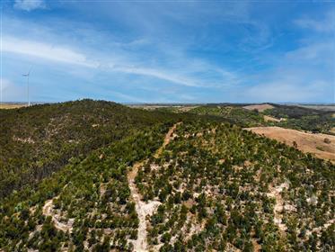 Terreno de 18 hectares com casa de campo para remodelar