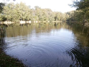 Propriété de 7ha 6 dont étang de 4 600 m² comprenant maison ancienne réhabilitée de 250 m² habitable