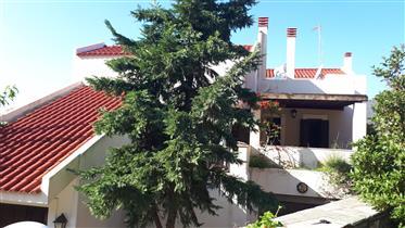Μονοκατοικία μέσα στη φύση πολύ κοντά στο Μπατσί της Άνδρου