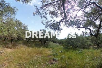 (Προς Πώληση) Αξιοποιήσιμη Γη Αγροτεμάχιο || Ν. Ζακύνθου/Αρκάδι - 14.000 τ.μ, 400.000€