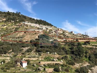 Terreno in Vendita a Bordighera, zona Montenero, con una bellissima vista mare.