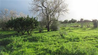 Rustic Land For Sale
