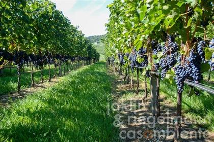 Azienda vitivinicola Doc Trentino con stupendo casale in posizione strabiliante