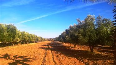 Belle ferme titrée à 8 km de Marrakech