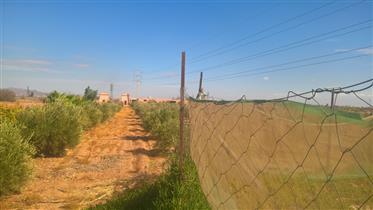 Land: 30000 m²