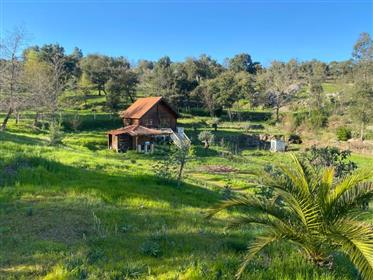Farm with 3 bedroom villa and bungalow T2, swimming pool, with 11.730m2 of land, between Tábua and O
