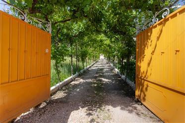 Baixa de Preço: Quinta com 2 casas, ideal para turismo rural, vista para a serra da Lousã, a 5 min a