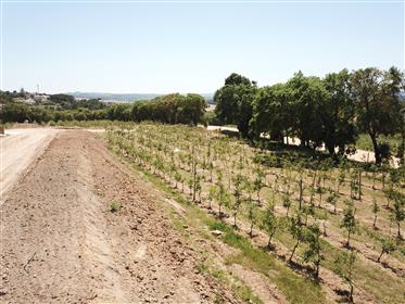 Moradias exclusivas à Venda numa propriedade de 16 hectares na Costa de Prata - Quinta de Santo Isid