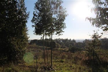Quinta do Monte: 3 moradias isoladas com vistas panorâmicas – Costa de Prata Portugal