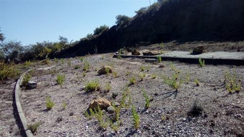 Terreno no Concelho de Arruda dos Vinhos para investimento