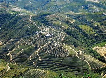 Quinta dans le Douro