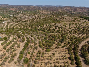 Unique land with approved project, Tavira