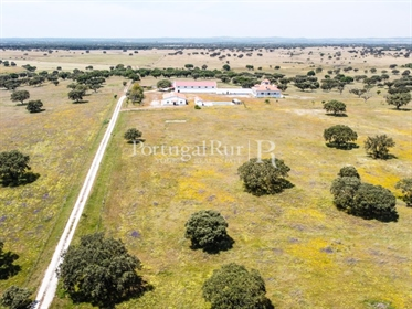 Big farm with 234 hectares in Évora district