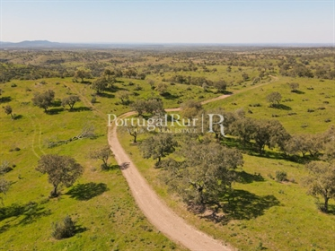 800-Hectare Property with 3 dams