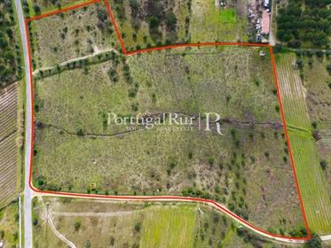 The Cabeção vineyards - 7,175 hectares