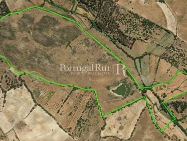 Herdade de 47,3 hectares em Idanha-a-Nova