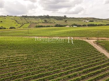 Quinta para produção de vinho com 36 hectares