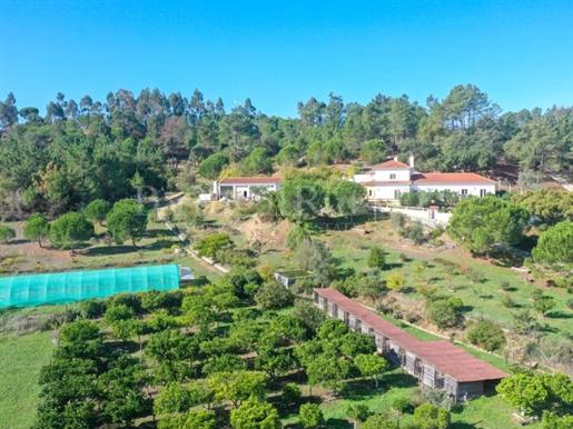 Quinta com 3,34 ha na Azambuja, 30 minutos de Lisboa