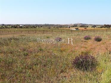 The farm of 'Malhada Velha' with an area of 7 hectares (70.0...