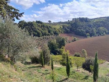 Casolare con annesso ed 1 ha di terreno ad 8 km da Volterra
