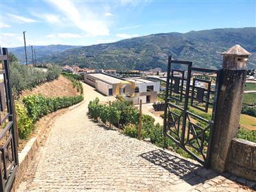 Luxury Farm in the Douro