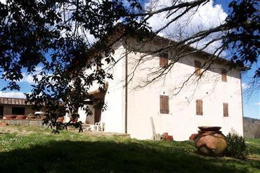 Hianti, dom wiejski, domek gościnny i stodoła na szczycie wzgórza otoczonego gajem oliwkowym