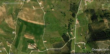 Granja cerca de Golegã