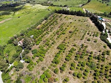 Este casa rústica se encuentra en Ds Montenegral Alto, Finca Franda montenegral alto, 1134