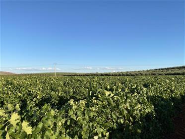Espectacular cortijo agrícola y de recreo en Ciudad Real