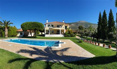 Una hermosa villa con un viñedo en Grecia