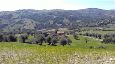 For Sale Farm With Olive Grove