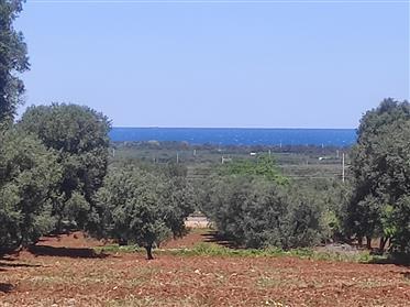 Terreno 4.2 ettari con vista mare