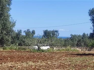 Terreno 2.8 ettari con ulivi secolari