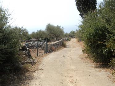 Sehr Günstig Von Privat- Bebaubarer Olivenhain mit Baugenehmigung (Spricht Deutsch)