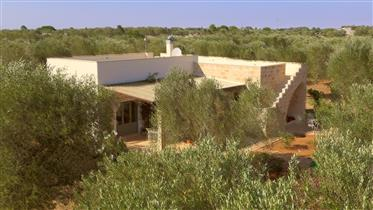 Salento, in the south of Puglia, among the olive trees...