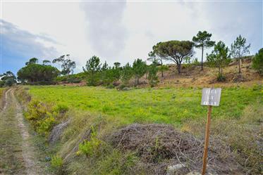 Οικόπεδα για κατασκευή 5 μεγάλων σπιτιών-Ναζαρέ