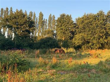 Propriedade / fazenda na Bretanha com 6 ha de terra em um ún...