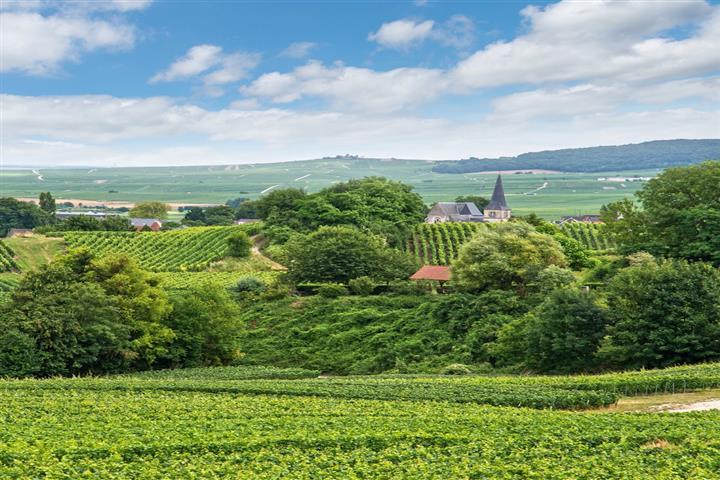 Village au coeur des vignobles, Marne